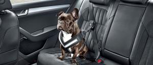 mascota en coche